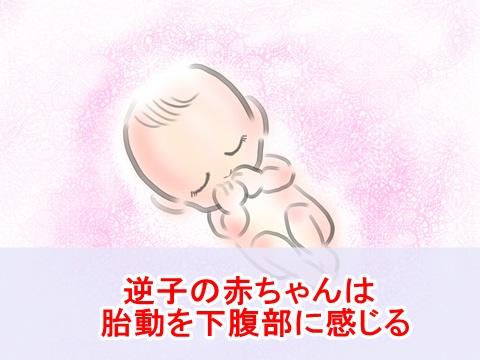 sakago-taidou02